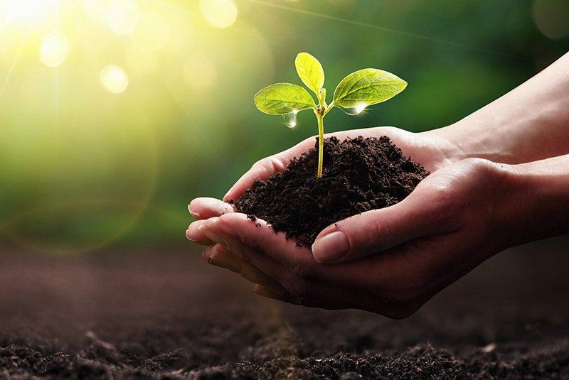 Nachhaltigkeit Beitragsbild